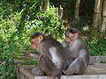 Wild life at zoo 06.jpg