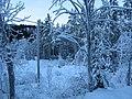 Winter, Jondalen, Kongsberg - panoramio.jpg