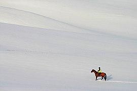 Winter isolation (geograph 1645986).jpg