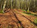 Winter sun in the woods of Cerisy la Forêt..JPG