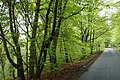 Wooded road near the Alyth Burn - geograph.org.uk - 173036.jpg