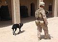 Working dog, handler prove useful in Afghanistan 140704-M-YZ032-109.jpg