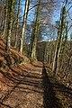 Workmans Wood - geograph.org.uk - 669882.jpg