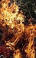 Wraxall 2013 MMB 72 Bonfire.jpg