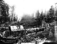 Yarding logs with donkey engine, unidentified logging operation, Washington, 1899 (KINSEY 2794).jpeg