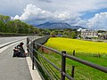 Yellow firm^^^@Nagasaka-Yamanashi-JPN May-04-2012 - panoramio (1).jpg