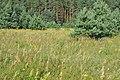 Ziedoša pļava pie mājām Skangaļi, Valgundes pagasts, Jelgavas novads, Latvia - panoramio.jpg