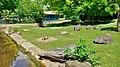 Zoo Koeln Hacienda Hydrochoerus.jpg