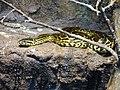 Zoo Ohrada, anakonda žlutá 01.jpg