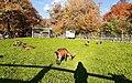 Zoo Sauvabelin.jpg