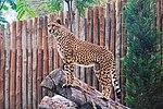 Zoo de Lisboa by Juntas 69.jpg