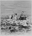 """""""Scene of Gen. Custer's last stand, looking in the direction of the ford and the Indian village."""" A pile of bones on the - NARA - 530869.tif"""