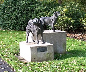 "Stabyhoun - ""Ús Hûnen"" (Our Dogs) an artwork found in the Frisian capital central park depicting a Stabij in the background beside a Wetterhoun"