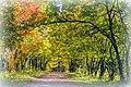 Аллея в дендропарке лесоводов Кировской области.jpg