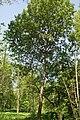 Асіна ў Севастопальскім парку 26.jpg