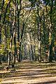 Звездарска шума.jpg