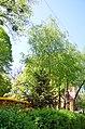Золотоворітський сквер - пам'ятка природи. Фото 4.jpg