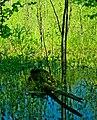 Карстовое болото.jpg