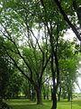 Мукачеве, парк Горького (14).jpg