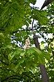 Наводницкий парк в Киеве. Фото 11.jpg