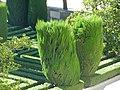 Оригинальная растительность - panoramio.jpg