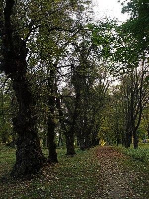 П'ятничанський парк (Вінниця) 10.JPG