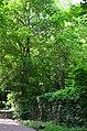 Парк Берёзовая роща в Киеве. Фото 14.jpg