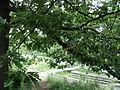 Парк шума Гази Баба во мај (105).JPG