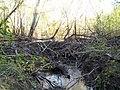 Плотина бобра - panoramio.jpg