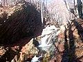 По пътя за хижа Хубавец, резерват Стара река... 24.jpg
