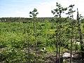 Рядом Малые Черти (Glade near Chertovo Gorodishche) - panoramio.jpg