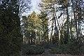 Сирецький дендрологічний парк 36.jpg