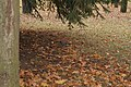 Сойка у Севастопальскім парку.JPG
