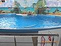 Сочинский дельфинарий парка «Ривьера». 23.jpg