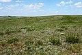 Степь в конце мая - panoramio (2).jpg