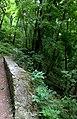 Сходи лісопарку (Тонкочеєва) IMG 9563.jpg