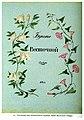 Титульный лист ботанического альбома Букет Восточной Сибири.jpg