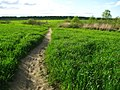 Тропинка в поле - panoramio.jpg