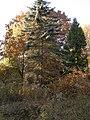 Украина, Киев - Голосеевский лес 138.jpg