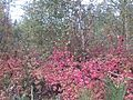 Цветы - panoramio (4).jpg