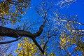 پاییزدر ایران-قاهان قم-Autumn in iran-qom 04.jpg