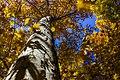 پاییزدر ایران-قاهان قم-Autumn in iran-qom 16.jpg