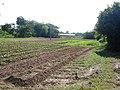 หมู่บ้าน นาพิพาน ต.ปะโค เมือง หนองคาย - panoramio (12).jpg