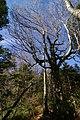 三森山方面山道 - panoramio (1).jpg