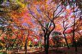 北の丸公園モミジ園 - panoramio (1).jpg