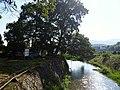 朱熹手植樟 - Camphor Tree Planted by Zhu Xi - 2015.07 - panoramio.jpg