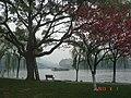 杭州.西湖-苏堤(远景:西泠桥.保叔塔). - panoramio.jpg