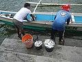 0016Hagonoy Fish Port River Bancas Birds 27.jpg