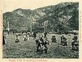 04937-Southern California-1903-Poppy Field in Southern-Brück & Sohn Kunstverlag (cropped).jpg