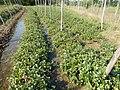 0581jfLandscapes Roads Vegetables Fields Binagbag Angat Bulacanfvf 08.JPG